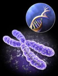 x-chromosome1