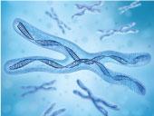 x-chromosome2
